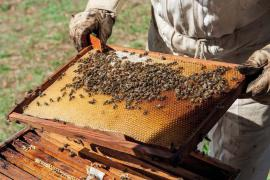 Apiculture © Olivier Prohin PnC