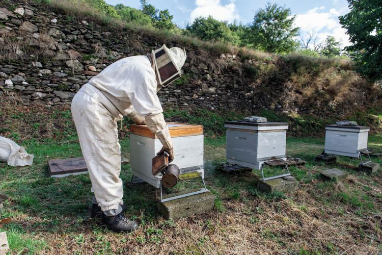 Apiculture © Olivier Prohin