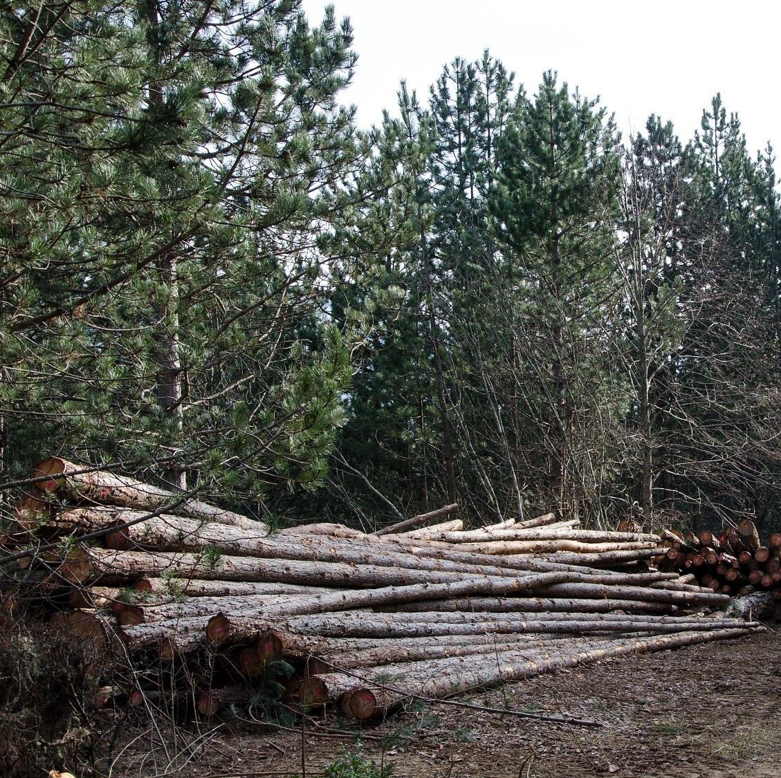 Coupe forestière et débardage © Olivier Prohin