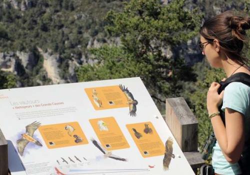 Panneau du sentier d'interprétation : Oiseaux des Causses et des Gorges, Belvédère du Roc des Hourtous © Manon Lanièce PNC
