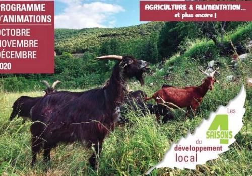 Les 4 saisons du développement local : automne 2020