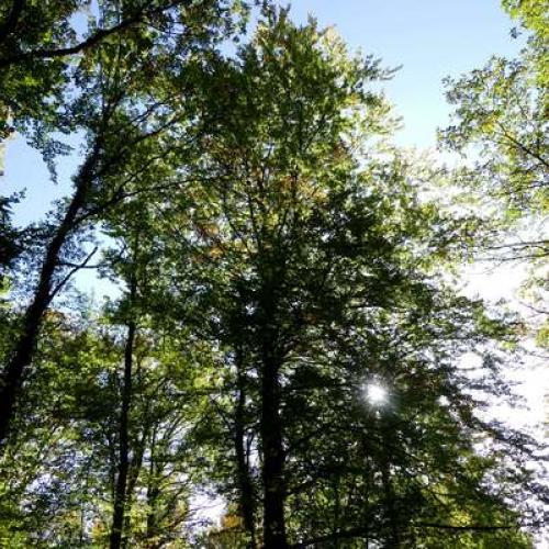 Forêt d'Auberive © Marie Quiquemelle