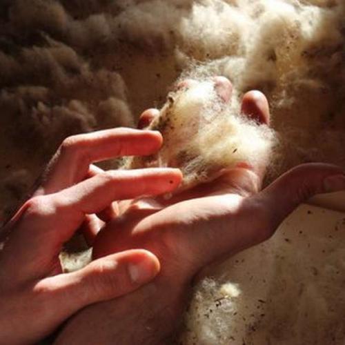 La laine © Patrick Mayet