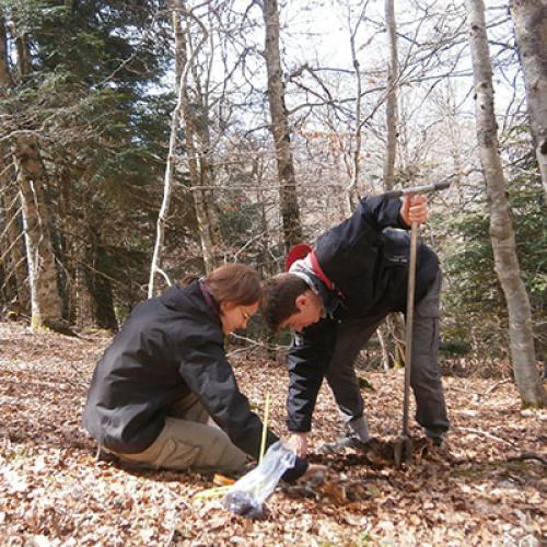 Floriane Kondratow et Florian Buralli dans une forêt ancienne du Parc national. Crédit : Mathieu Baconnet