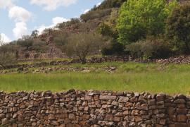 Bancels avec des oliviers vers le hameau de Pagès, vallée de la Salindrenque © Olivier Prohin