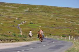 Balade à cheval sur le mont Lozère © Catherine Vambairgue