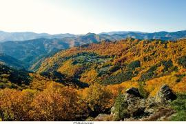 Chaâigneraie à l'automne, Alain LAGRAVE, PnC ©