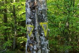 Arbre d'intérêt écologique préservé, forêt domaniale de l'Aigoual gardois, Mathieu BACONNET, PnC ©