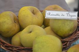 Pomme variété Reinette du Vigan © Marianne Casamance
