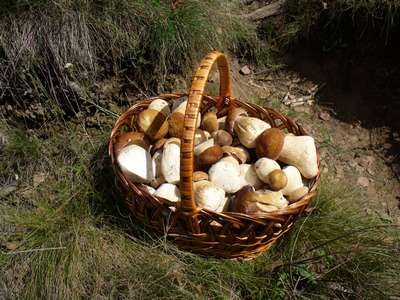 cep_in_basket_2006_george_chernilevsky.jpg