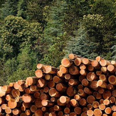 Coupe de bois © Arnaud Bouissou TERRA Ministère de l'Environnement